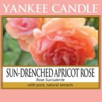 Sun-Drenched Apricot Rose / Rose succulente