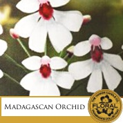 Madagascan Orchid yankee candle