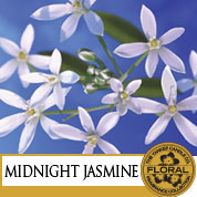 Midnight jasmin / Jasmin